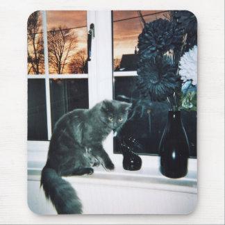 Gato gris mousepads