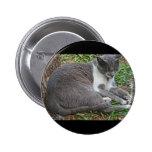Gato gris pin