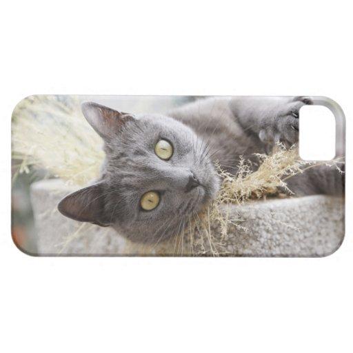 Gato gris que miente en el pote, Olargues, Funda Para iPhone SE/5/5s