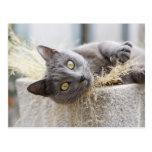 Gato gris que miente en el pote, Olargues, Tarjeta Postal