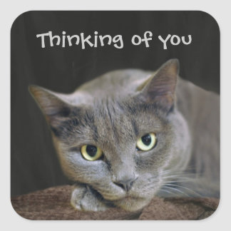 Gato gris que piensa en usted pegatina cuadrada