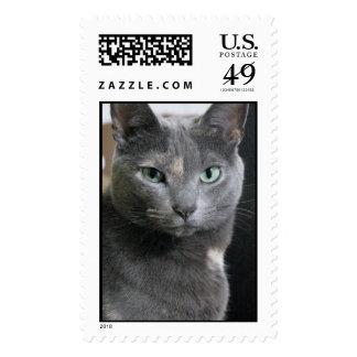 Gato gris envio