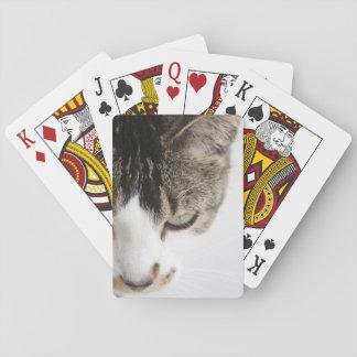 Gato gris y blanco serio cartas de póquer
