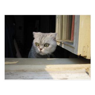 Gato gruñón 2,0 postales