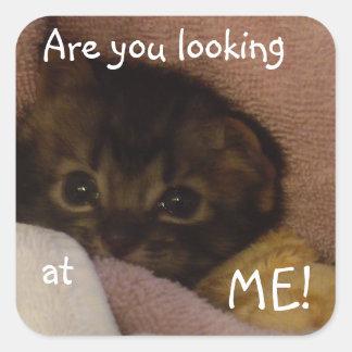 gato gruñón del bebé pegatina cuadrada