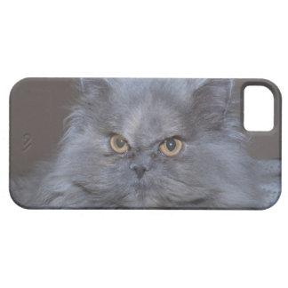 Gato gruñón hermoso de los casos lindos del iPhone iPhone 5 Case-Mate Cobertura