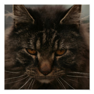 Gato gruñón poster