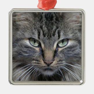 Gato guardado del gatito del Coon de Maine Ornato