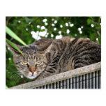 Gato hace enfadado postales