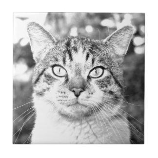 Gato hermoso azulejo cuadrado pequeño