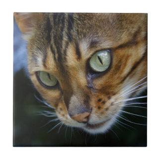 Gato hermoso de Bengala Azulejo Cuadrado Pequeño