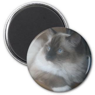 Gato hermoso de Ragdoll Hymalayan que mira afuera Imán Redondo 5 Cm