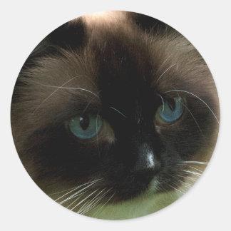 Gato hermoso de Ragdoll Pegatina Redonda