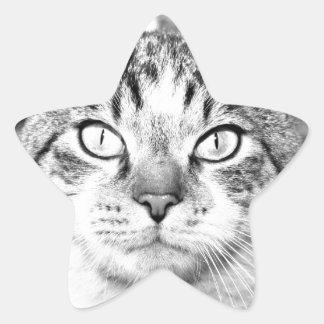 Gato hermoso pegatina en forma de estrella