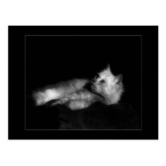 Gato hermoso (Srta. Beauchler) Postal
