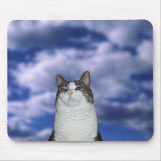 Gato heroico tapete de raton