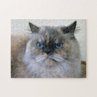 Gato Himalayan con los ojos azules Rompecabezas Con Fotos