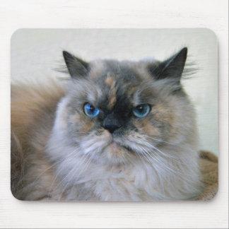 Gato Himalayan con los ojos azules Alfombrillas De Ratones