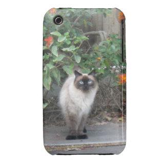 Gato Himalayan de la mezcla iPhone 3 Carcasa