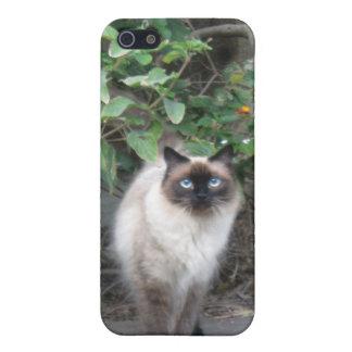 Gato Himalayan de la mezcla iPhone 5 Carcasa