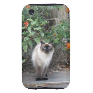 Gato Himalayan de la mezcla Tough iPhone 3 Cárcasas