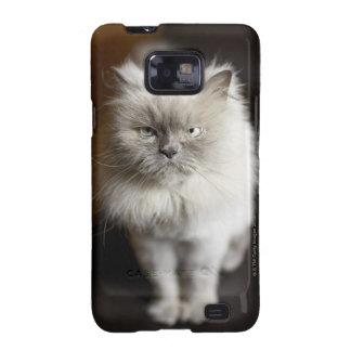 Gato Himalayan del punto azul que parece irritado Samsung Galaxy S2 Carcasa