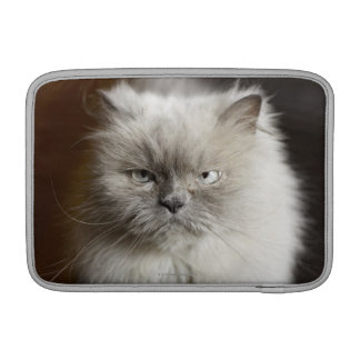 Gato Himalayan del punto azul que parece irritado Fundas MacBook