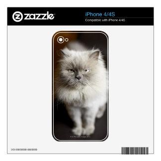 Gato Himalayan del punto azul que parece irritado Calcomanías Para El iPhone 4S
