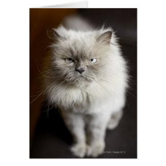 Gato Himalayan del punto azul que parece irritado Tarjetas