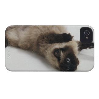 Gato Himalayan que miente en el suyo detrás Funda Para iPhone 4