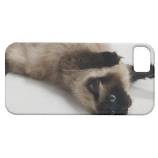 Gato Himalayan que miente en el suyo detrás Funda Para iPhone SE/5/5s