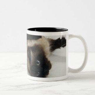 Gato Himalayan que miente en el suyo detrás Taza De Café