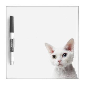 Gato impar-observado blanco 2 tableros blancos