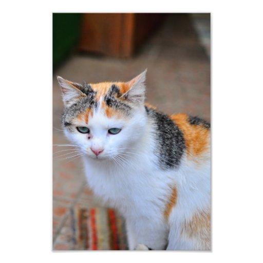 Gato Impresión Fotográfica