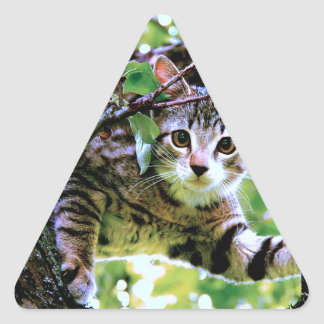 Gato impresionante que subió diseño de la foto del pegatina triangular