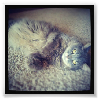 Gato-Instagram Fotografía