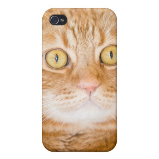 Gato iPhone 4 Protectores