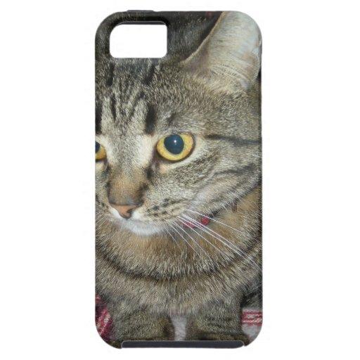 Gato iPhone 5 Carcasas