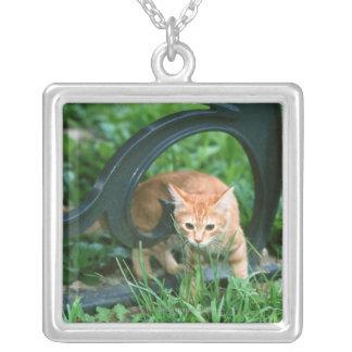 Gato japonés 3 collar plateado