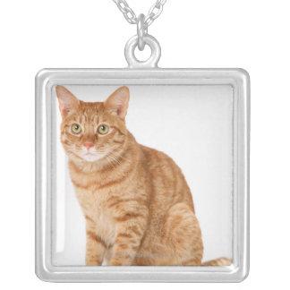 Gato japonés collar plateado