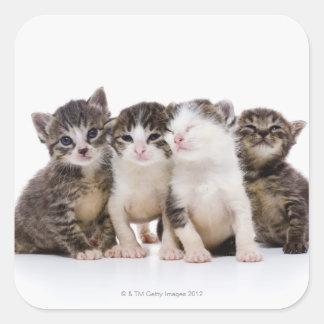 Gato japonés calcomanía cuadradase