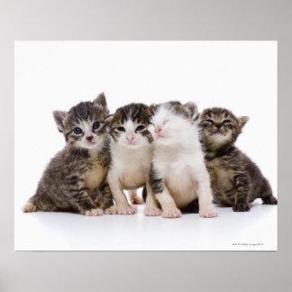 Gato japonés póster