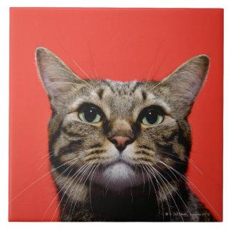 Gato japonés que mira para arriba azulejo cuadrado grande