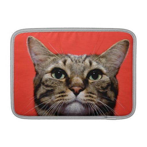 Gato japonés que mira para arriba fundas macbook air