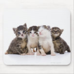 Gato japonés tapetes de raton