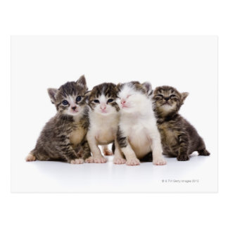 Gato japonés tarjetas postales