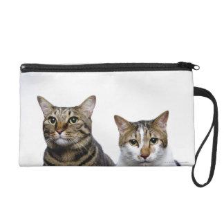 Gato japonés y gato de la Isla de Man en el fondo