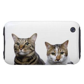 Gato japonés y gato de la Isla de Man en el fondo  iPhone 3 Tough Fundas