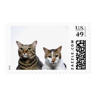 Gato japonés y gato de la Isla de Man en el fondo Sello