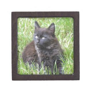 gato - jardín caja de regalo de calidad